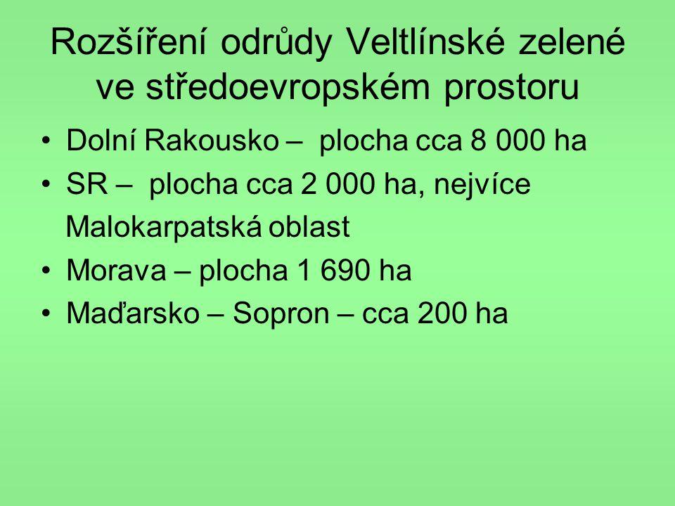 Rozšíření odrůdy Veltlínské zelené ve středoevropském prostoru
