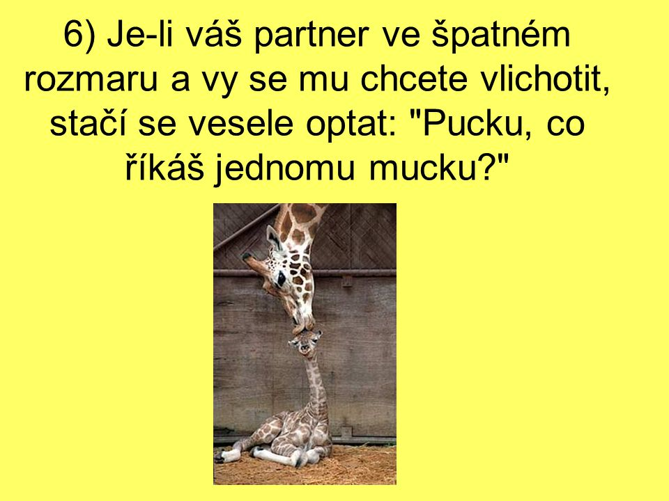 6) Je-li váš partner ve špatném rozmaru a vy se mu chcete vlichotit, stačí se vesele optat: Pucku, co říkáš jednomu mucku