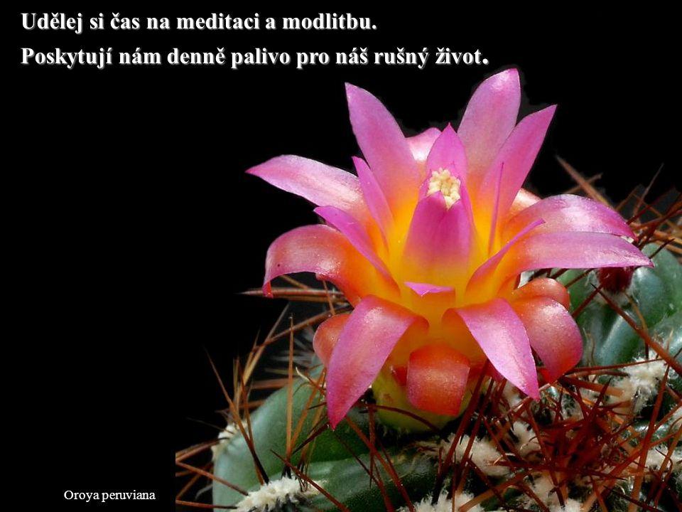 Udělej si čas na meditaci a modlitbu.