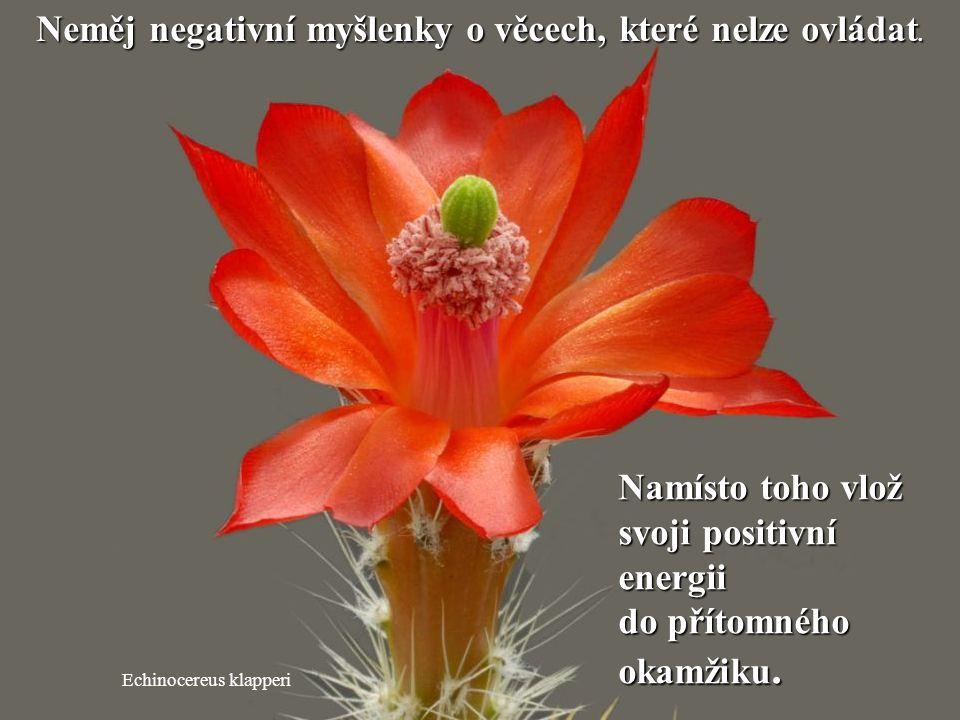Neměj negativní myšlenky o věcech, které nelze ovládat.