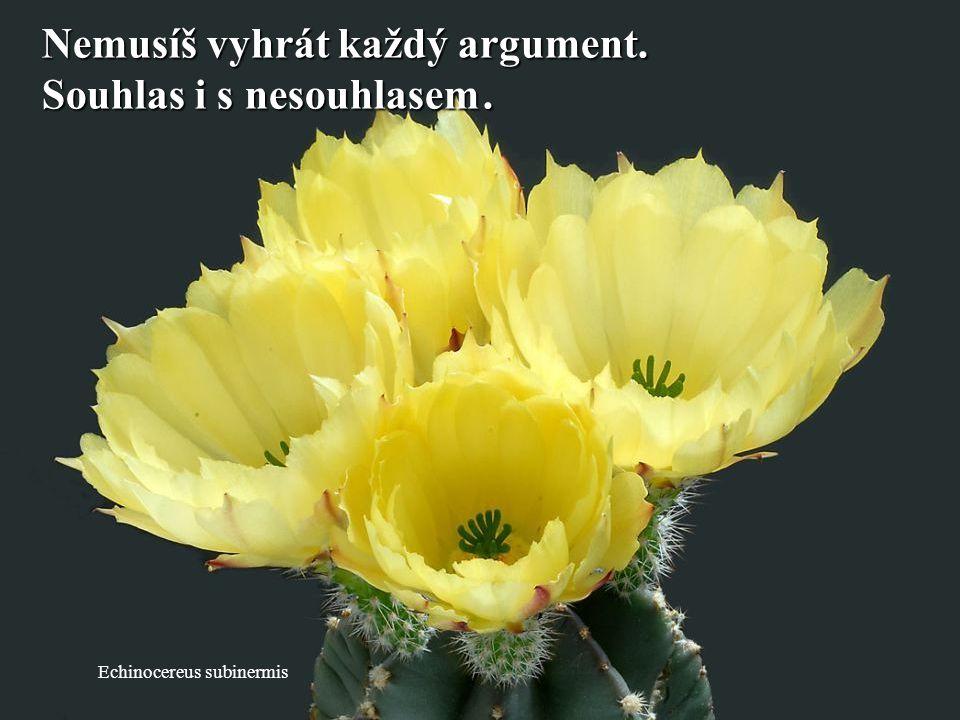 Nemusíš vyhrát každý argument. Souhlas i s nesouhlasem .