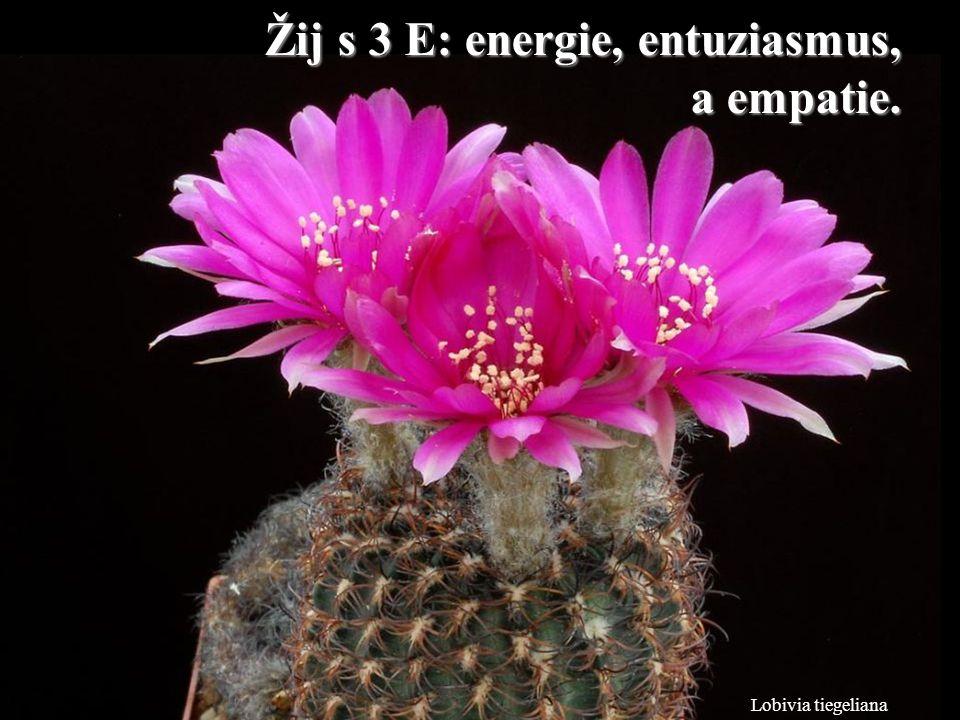 Žij s 3 E: energie, entuziasmus, a empatie.