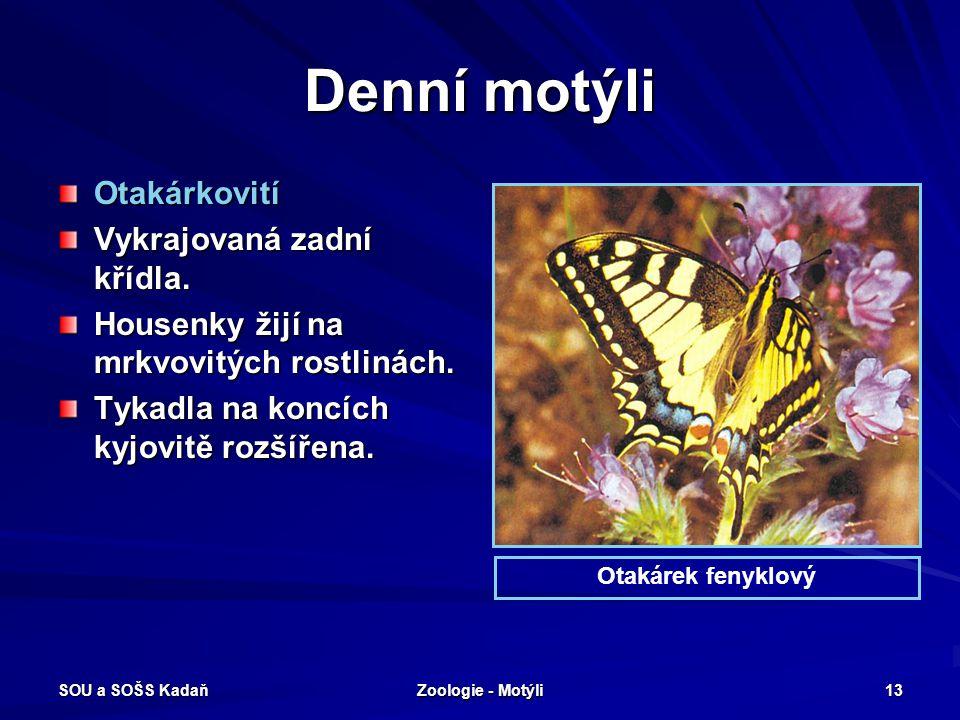 Denní motýli Otakárkovití Vykrajovaná zadní křídla.