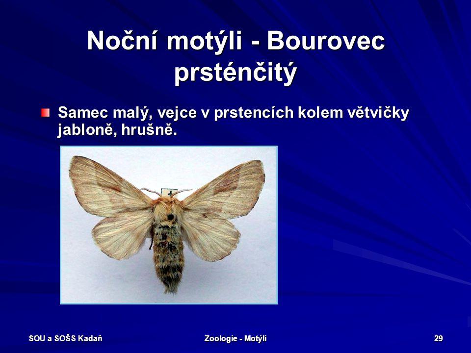 Noční motýli - Bourovec prsténčitý