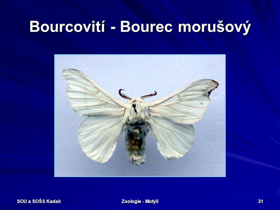 Bourcovití - Bourec morušový