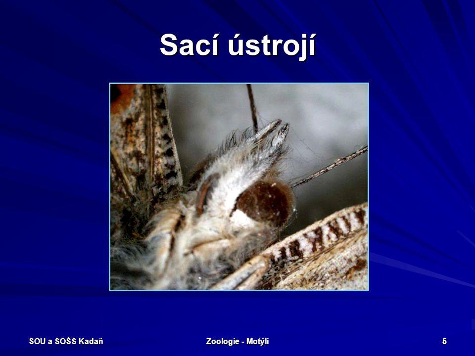 Sací ústrojí SOU a SOŠS Kadaň Zoologie - Motýli