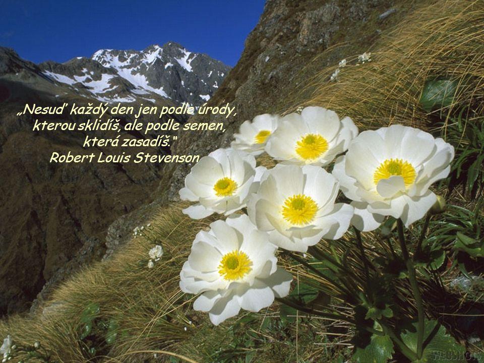 """""""Nesuď každý den jen podle úrody, kterou sklidíš, ale podle semen,"""