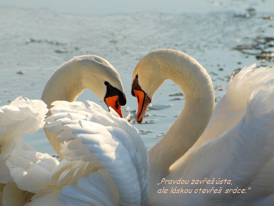 """""""Pravdou zavřeš ústa, ale láskou otevřeš srdce."""