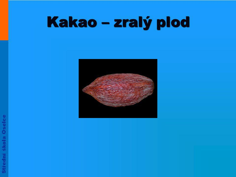 Kakao – zralý plod