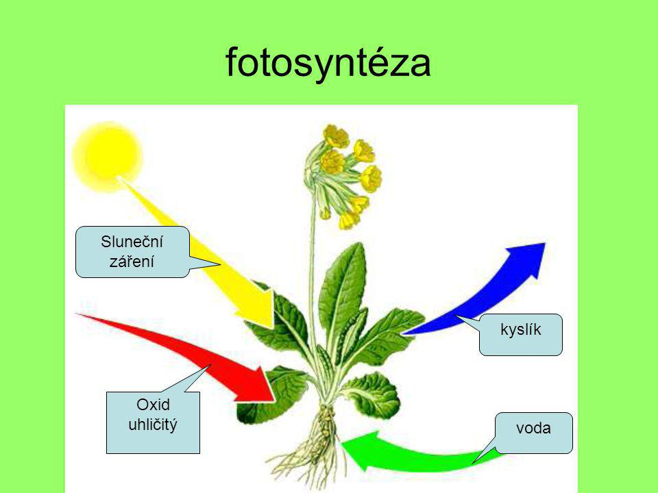 fotosyntéza Sluneční záření kyslík Oxid uhličitý voda