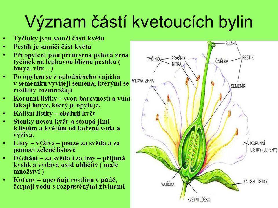 Význam částí kvetoucích bylin