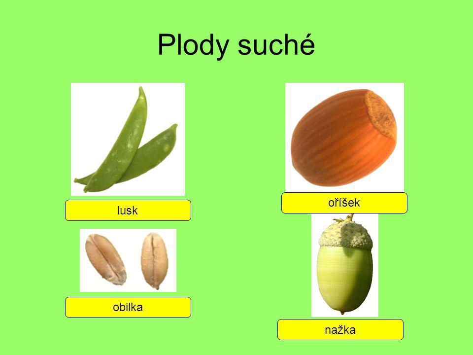 Plody suché oříšek lusk obilka nažka