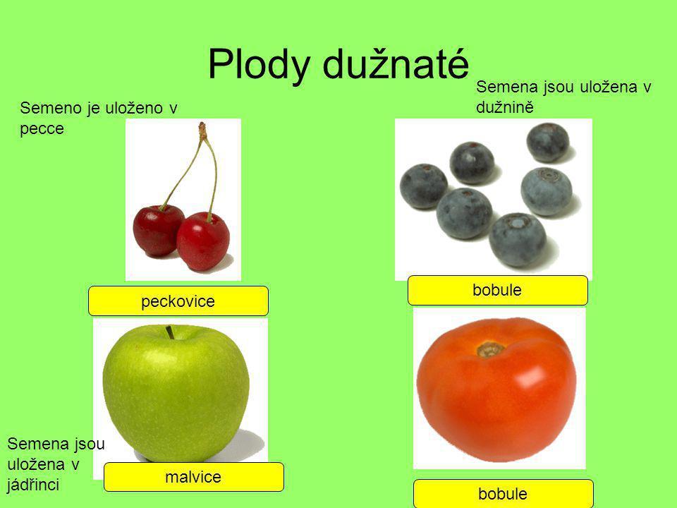 Plody dužnaté Semena jsou uložena v dužnině Semeno je uloženo v pecce