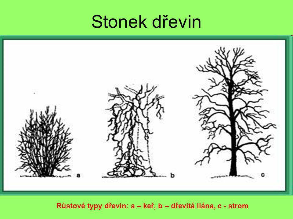 Stonek dřevin Růstové typy dřevin: a – keř, b – dřevitá liána, c - strom