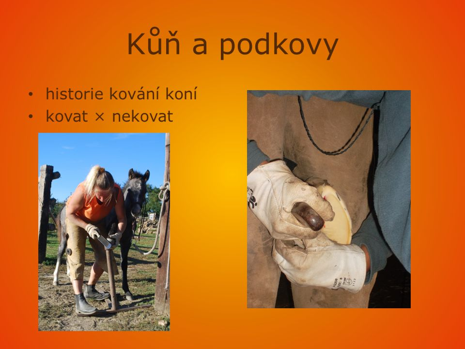Kůň a podkovy historie kování koní kovat × nekovat
