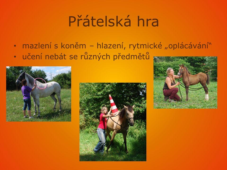 """Přátelská hra mazlení s koněm – hlazení, rytmické """"oplácávání"""