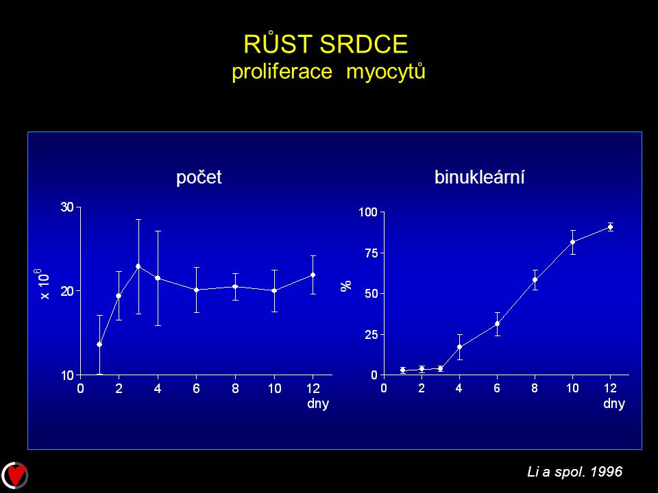 RŮST SRDCE proliferace myocytů počet binukleární Li a spol. 1996