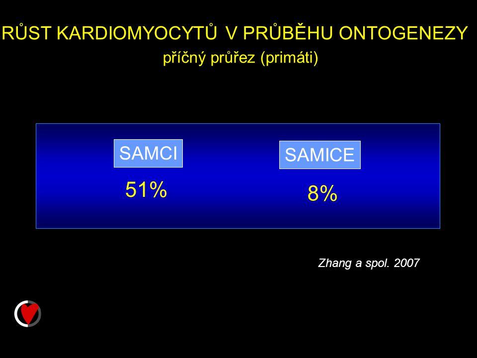 51% RŮST KARDIOMYOCYTŮ V PRŮBĚHU ONTOGENEZY příčný průřez (primáti)