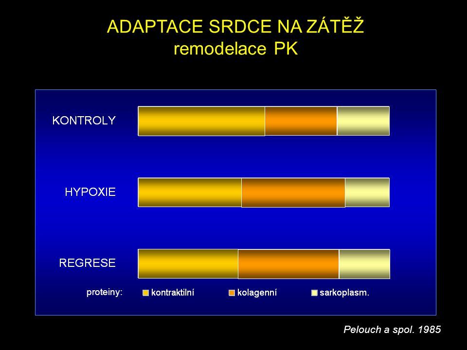 ADAPTACE SRDCE NA ZÁTĚŽ remodelace PK