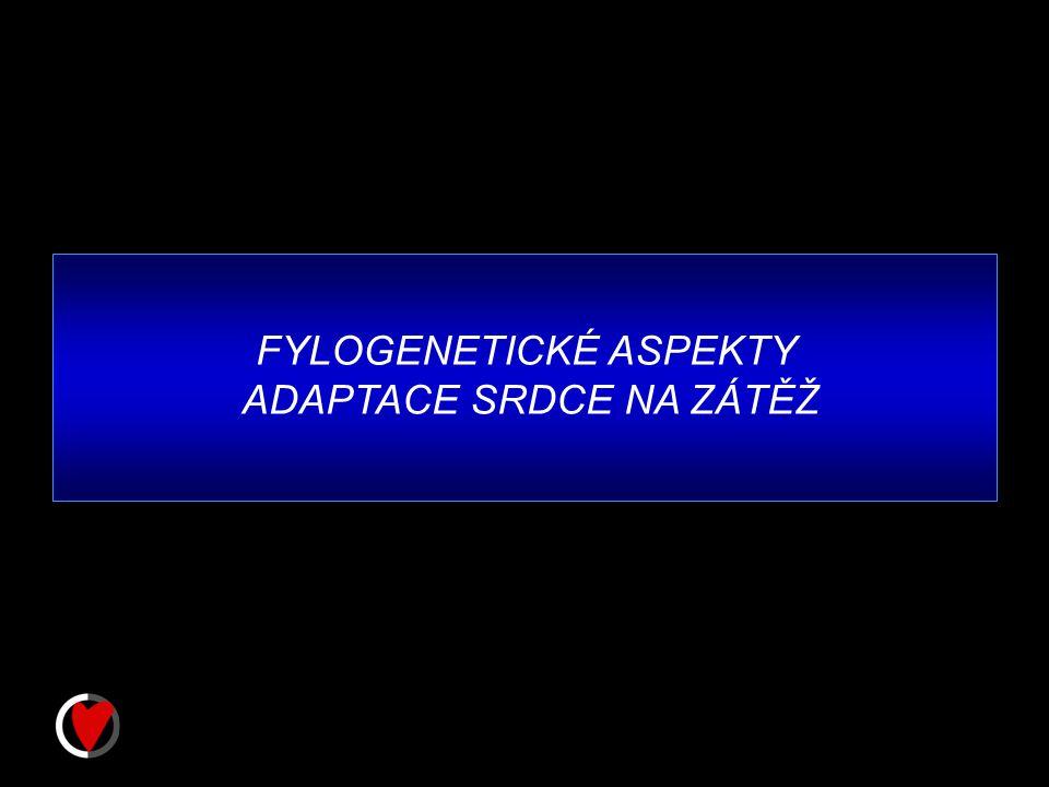 FYLOGENETICKÉ ASPEKTY ADAPTACE SRDCE NA ZÁTĚŽ