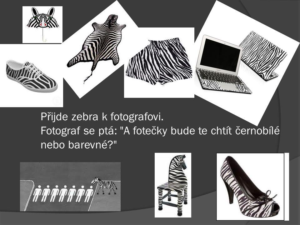 Přijde zebra k fotografovi