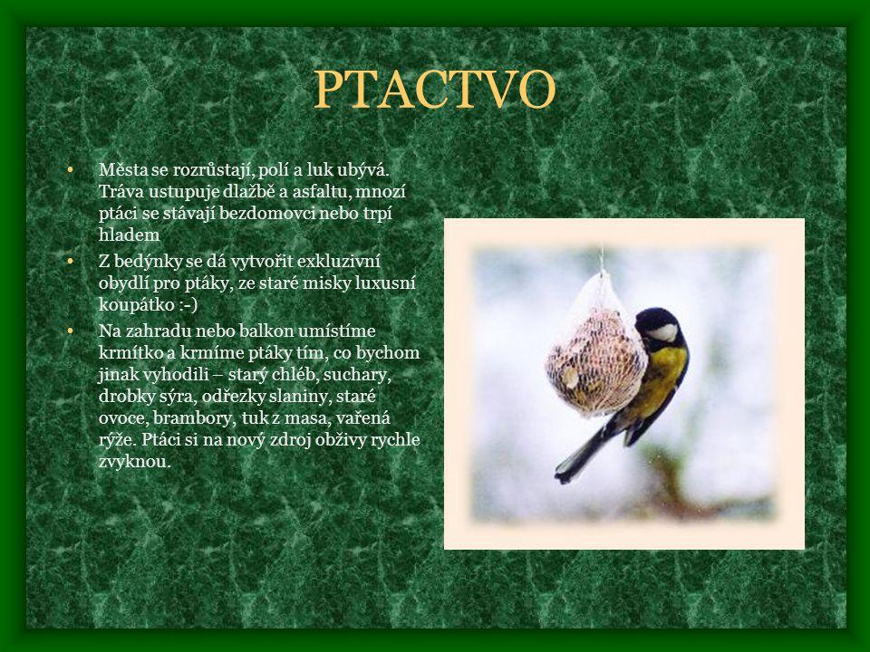 PTACTVO Města se rozrůstají, polí a luk ubývá. Tráva ustupuje dlažbě a asfaltu, mnozí ptáci se stávají bezdomovci nebo trpí hladem.