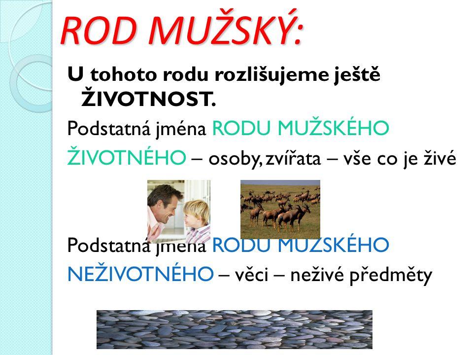 ROD MUŽSKÝ: