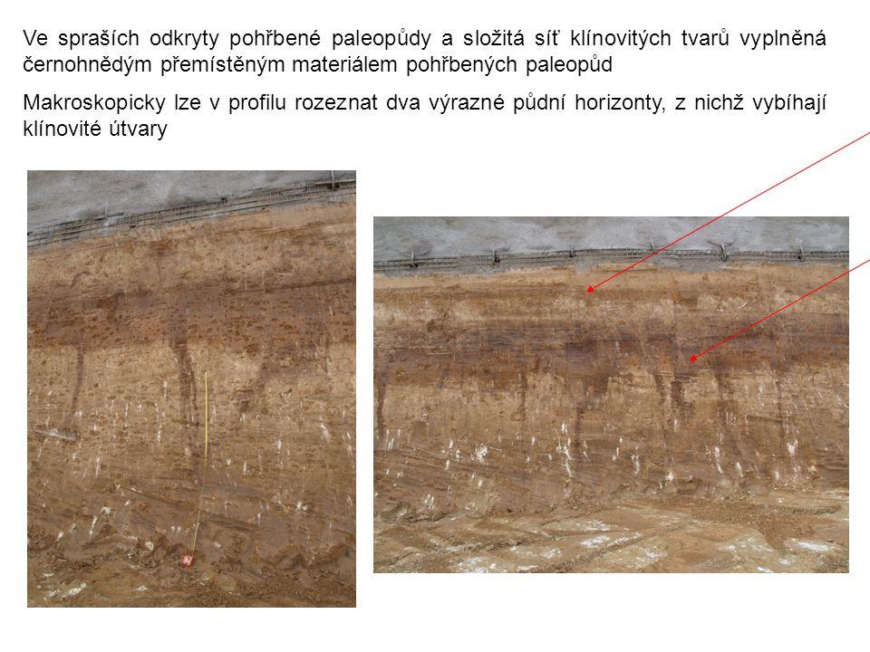 Ve spraších odkryty pohřbené paleopůdy a složitá síť klínovitých tvarů vyplněná černohnědým přemístěným materiálem pohřbených paleopůd