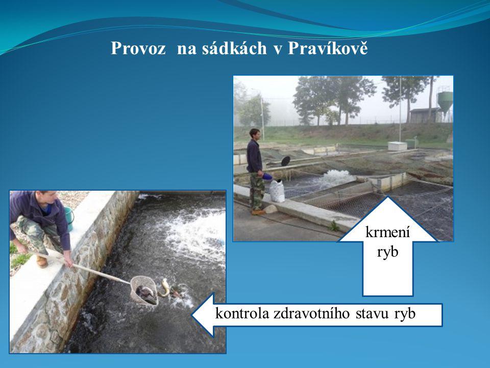Provoz na sádkách v Pravíkově