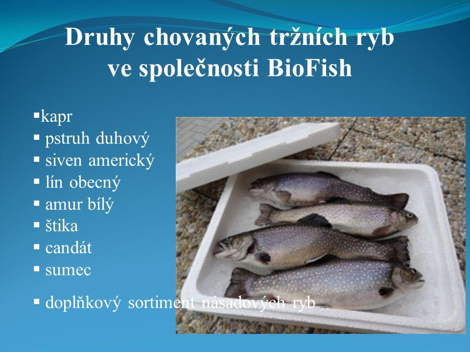 Druhy chovaných tržních ryb ve společnosti BioFish