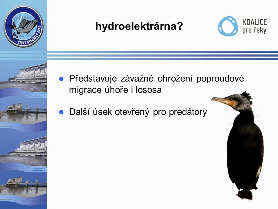 hydroelektrárna Představuje závažné ohrožení poproudové
