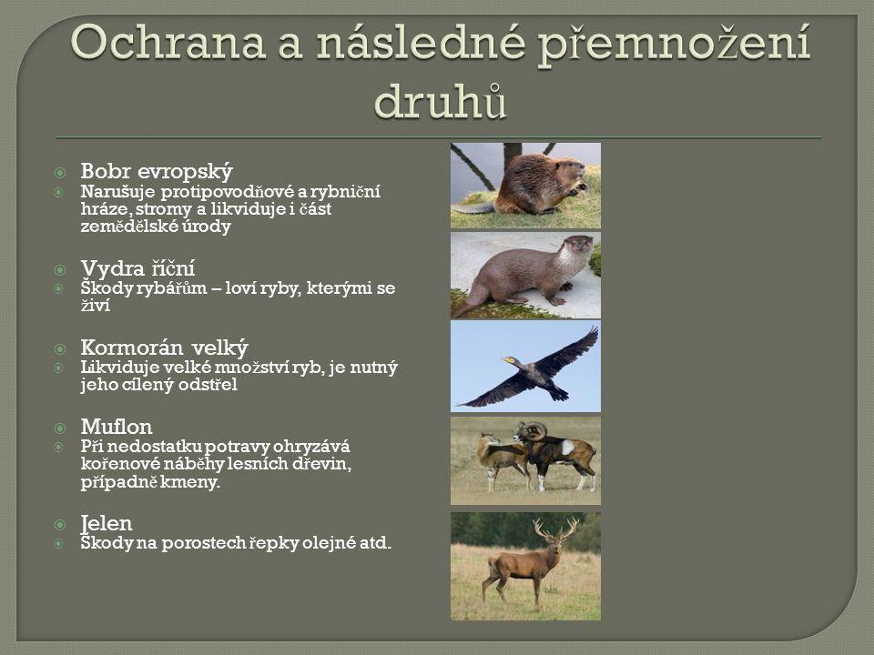 Ochrana a následné přemnožení druhů