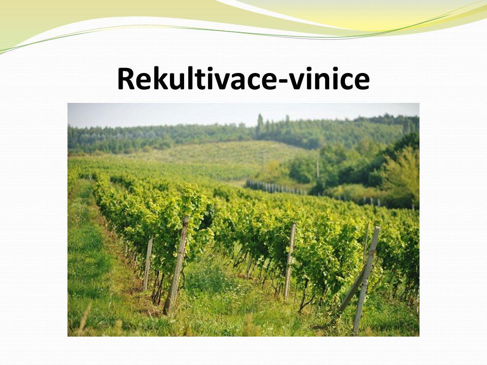 Rekultivace-vinice
