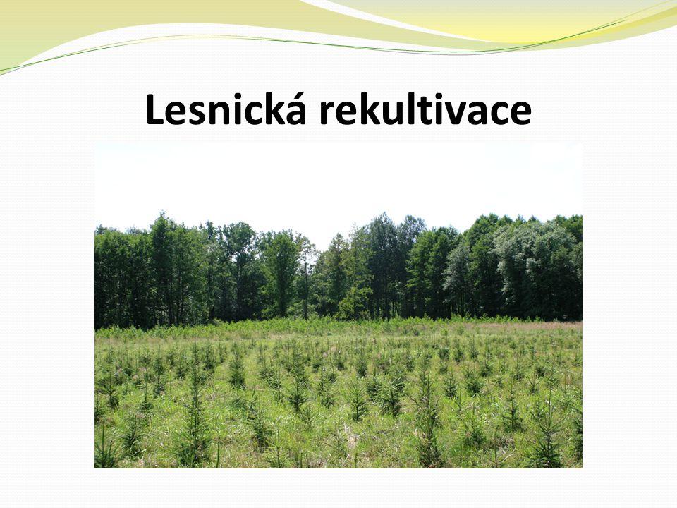 Lesnická rekultivace