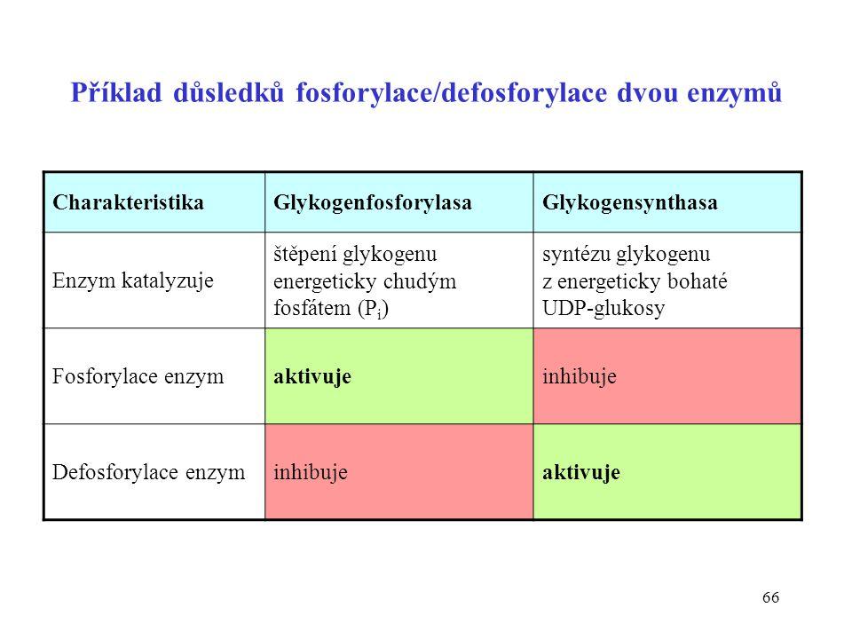 Příklad důsledků fosforylace/defosforylace dvou enzymů