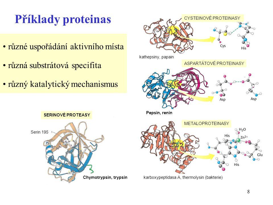Příklady proteinas různé uspořádání aktivního místa
