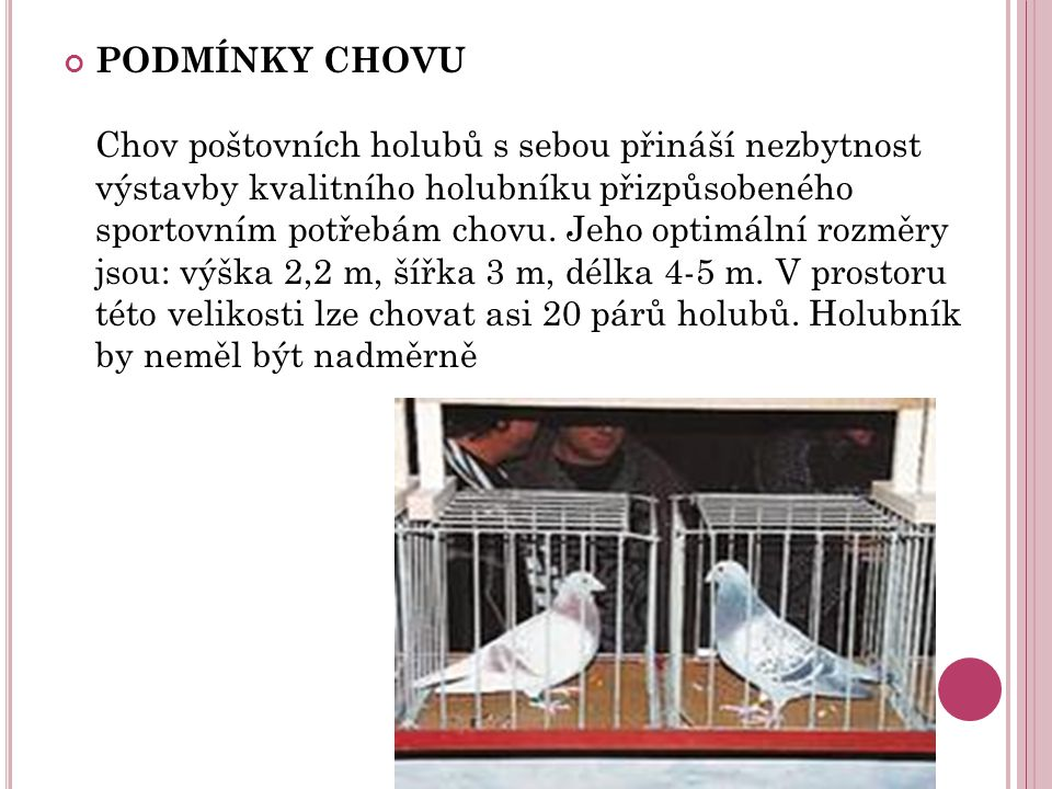 PODMÍNKY CHOVU Chov poštovních holubů s sebou přináší nezbytnost výstavby kvalitního holubníku přizpůsobeného sportovním potřebám chovu.