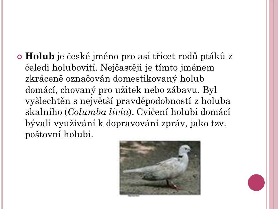 Holub je české jméno pro asi třicet rodů ptáků z čeledi holubovití