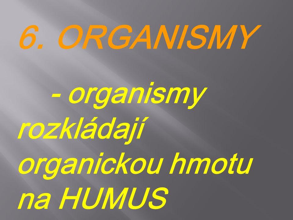 6. ORGANISMY - organismy rozkládají organickou hmotu na HUMUS