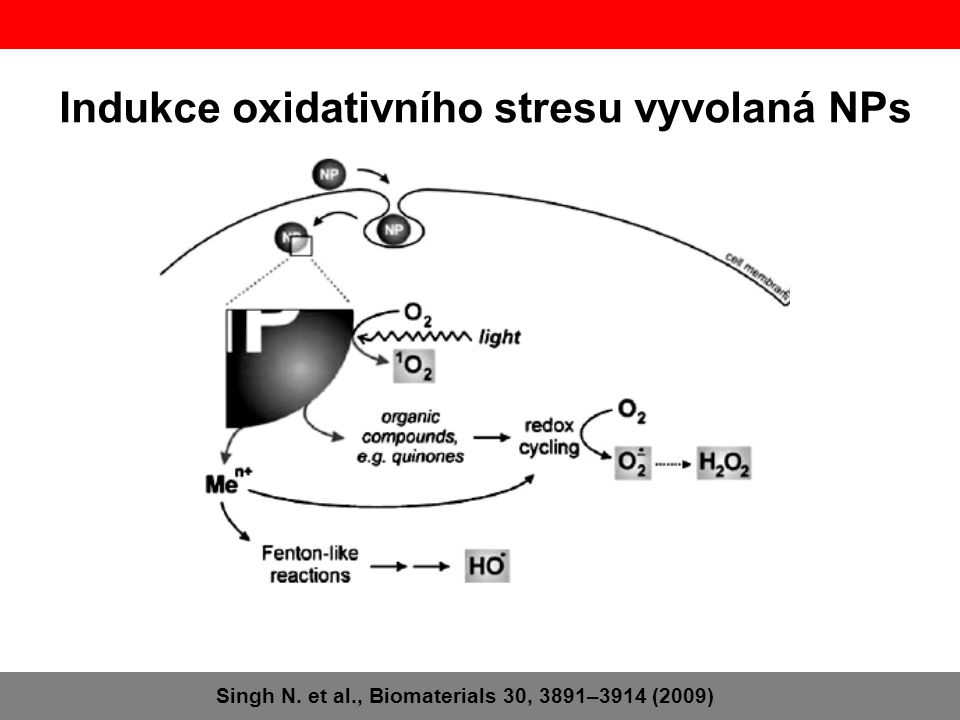 Indukce oxidativního stresu vyvolaná NPs