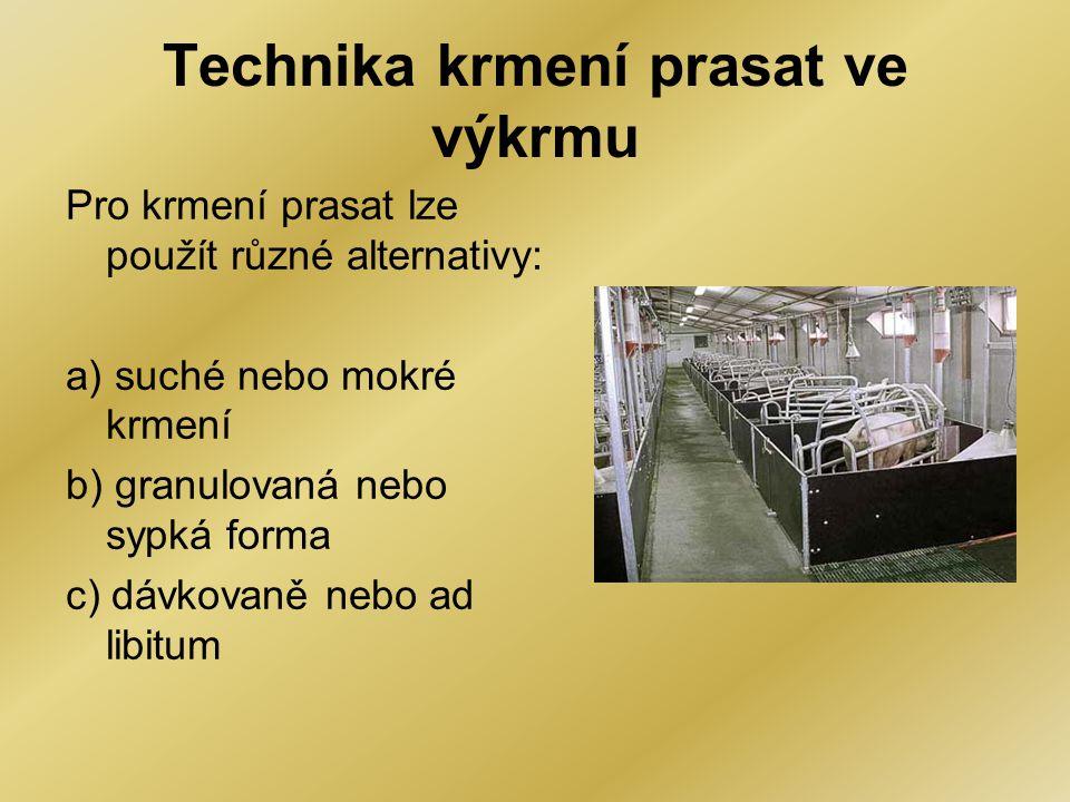 Technika krmení prasat ve výkrmu