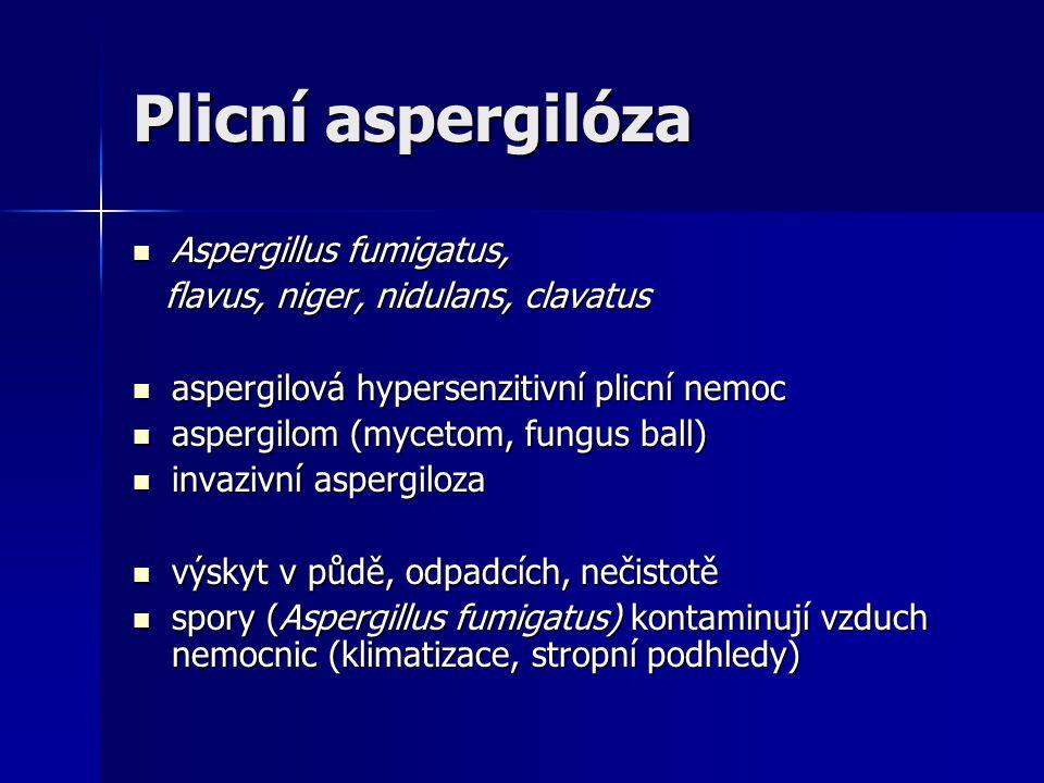 Plicní aspergilóza Aspergillus fumigatus,