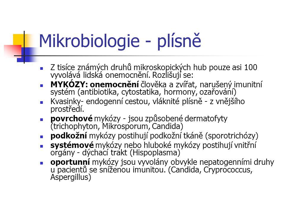 Mikrobiologie - plísně