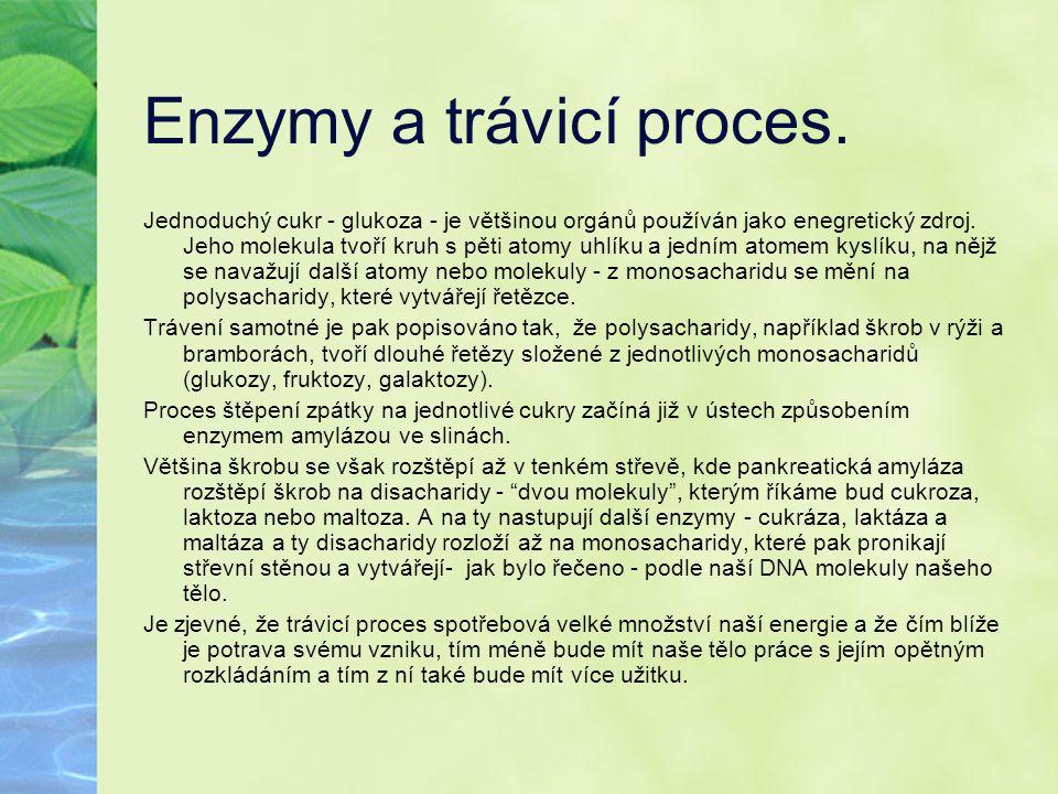 Enzymy a trávicí proces.