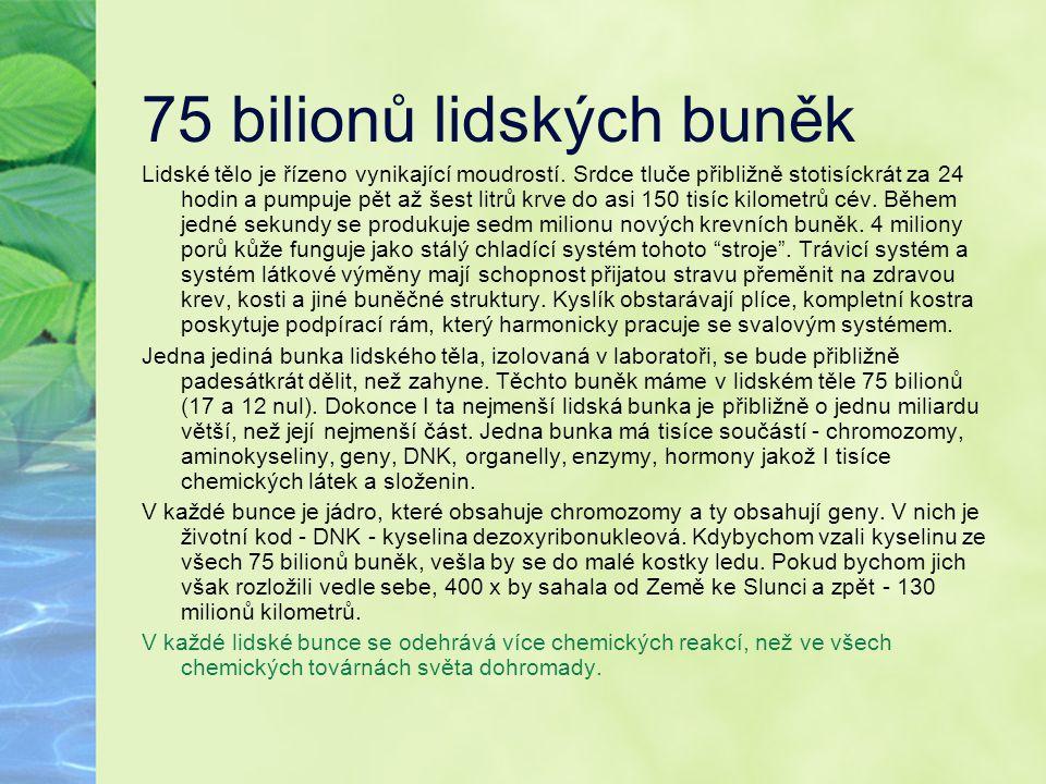 75 bilionů lidských buněk