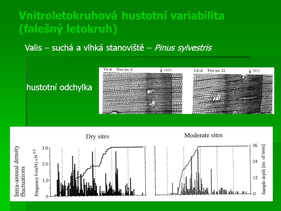 Vnitroletokruhová hustotní variabilita (falešný letokruh)