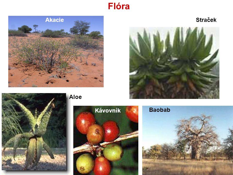 Flóra Akacie Straček Aloe Kávovník Baobab
