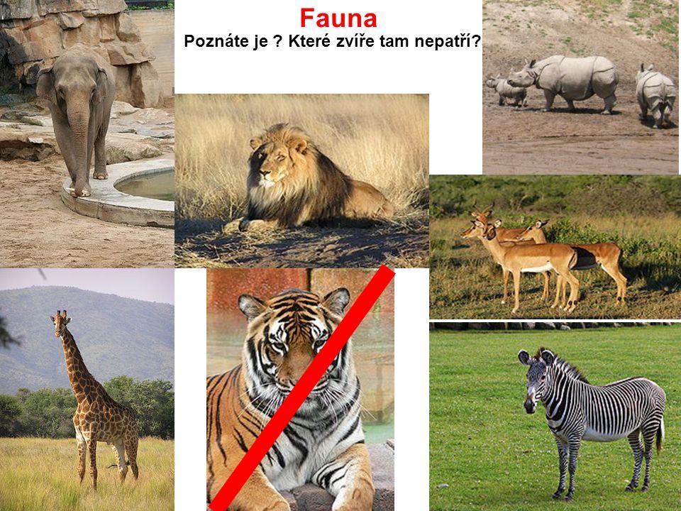 Fauna Poznáte je Které zvíře tam nepatří