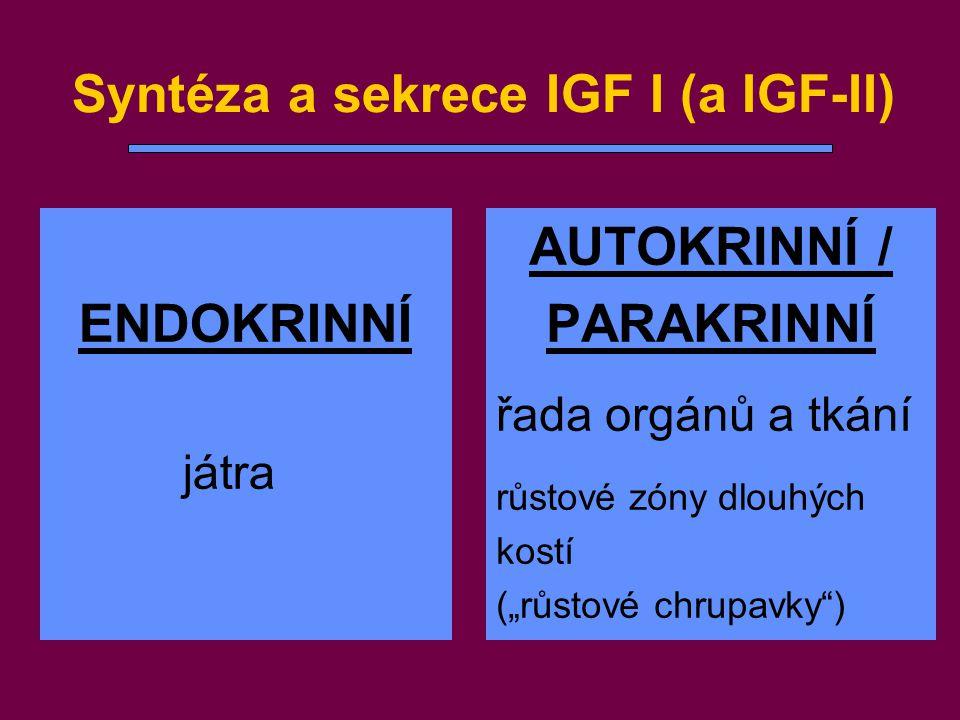Syntéza a sekrece IGF I (a IGF-II)