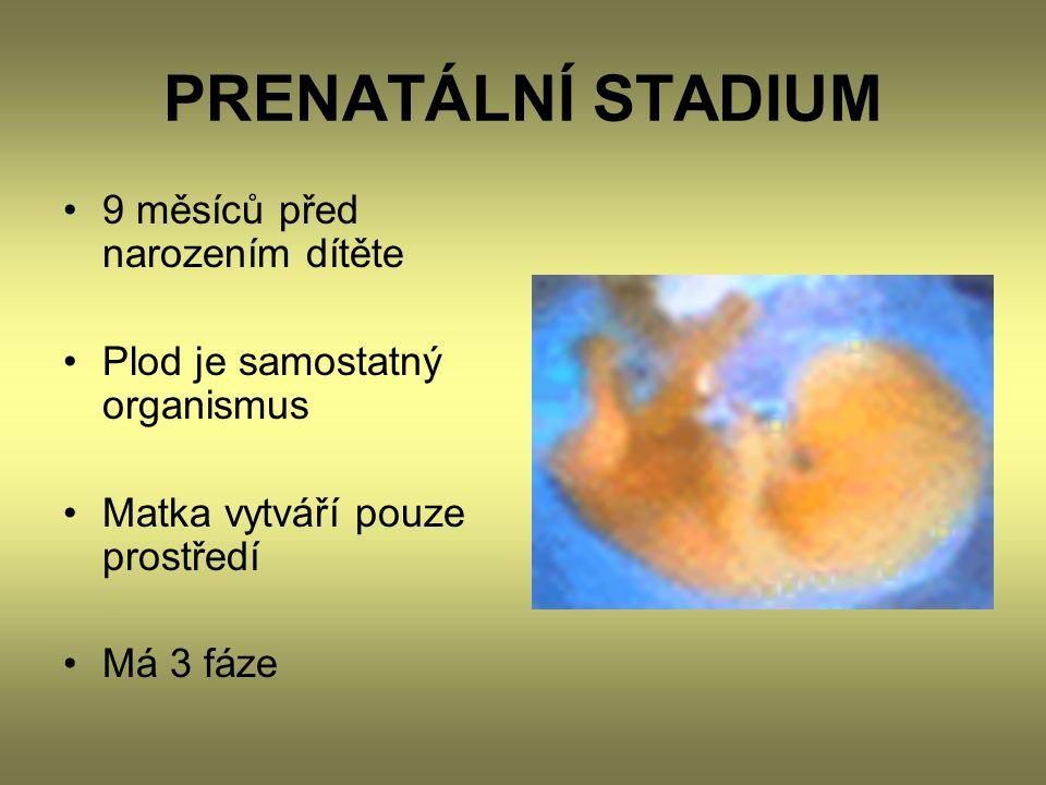 PRENATÁLNÍ STADIUM 9 měsíců před narozením dítěte